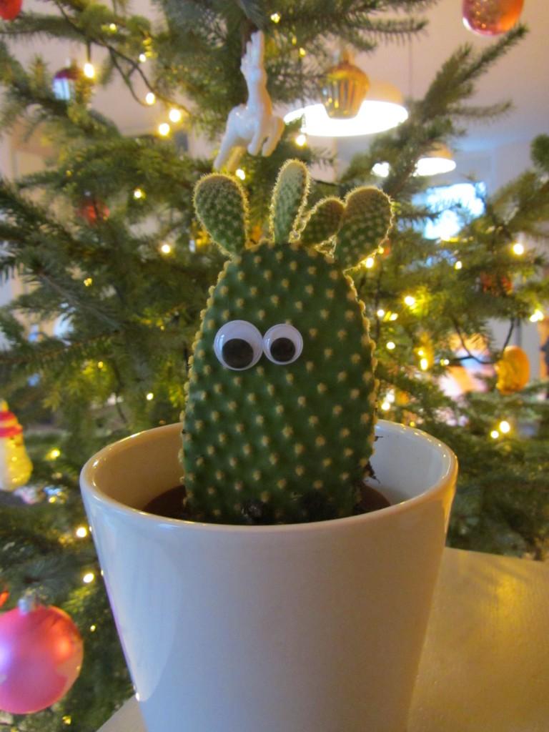 kerstcactus in huize lauriekoek @ lauriekoek.nl