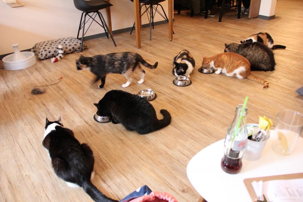 Kattencafé op z'n kop @ Lauriekoek.nl